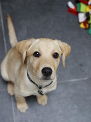 Puppy training Barnet