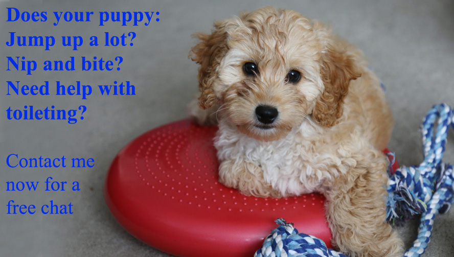 Puppy advice & training north London